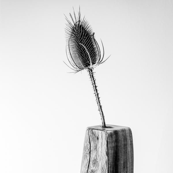 WOPU Galerie - 025